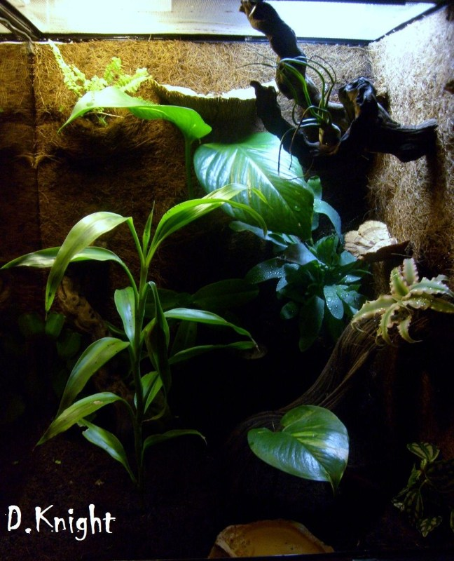 A Callidryas Vivarium The World Of Frogs